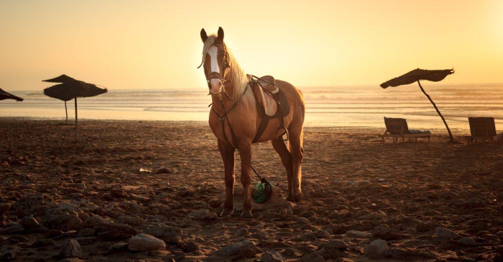 Pferd am Strand im Warmen